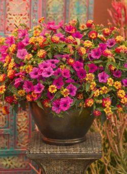 Kwiaty do ogrodu <3