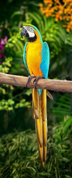 Brazylia, Ptaki i Papugi