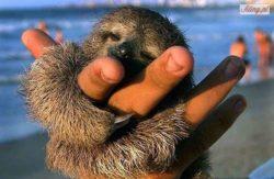 najmniejsze zwierzę świata