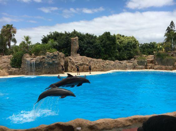 Zwierzeta, delfiny