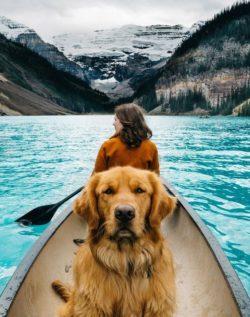 Podróże, Zwierzęta Domowe i Golden Retrievery