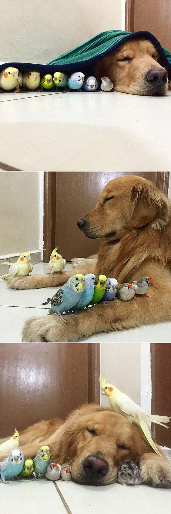 Najlepsi Przyjaciele i Ptaki