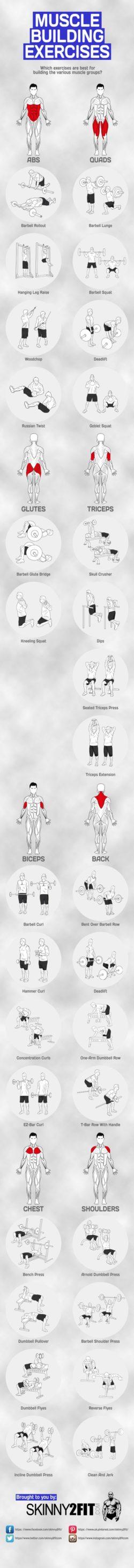 Budowanie mięśni, ćwiczenia