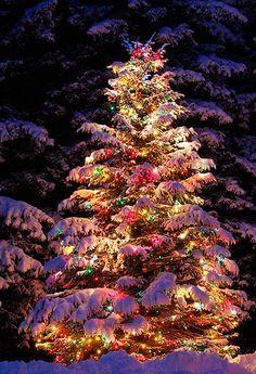 Piękne świąteczne choinki