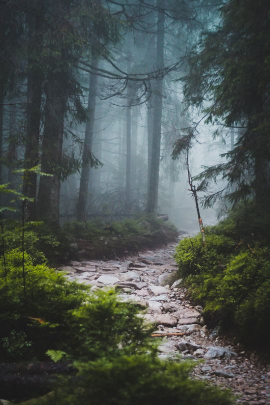 Lasy,natura, krajobraz