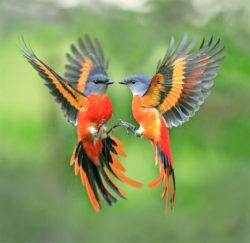 Piękne ptaszki kolorowe